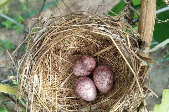 Wow, Ternyata Sesama Telur Bisa Berkomunikasi !