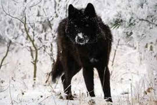 Tragedi Pesta Pernikahan Mengerikan, 118 Orang Tewas Dimangsa Serigala