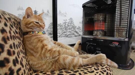 Meskipun Masih Polemik, Ini Alasan Kenapa Kucing Perlu Disterilkan