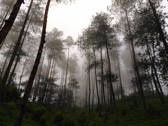 Hutan Manding Jalur Suwanting