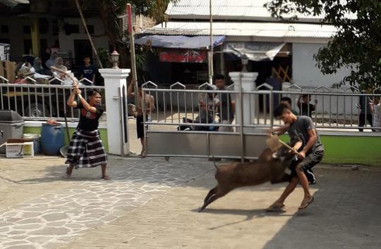 Duel dengan Babi Hutan di Halaman Masjid, Warga Terkapar