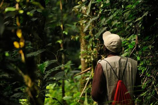 Negara Berbahasa Jawa Ini Berhasil Mempertahankan Hutan 98% dari Luas Negaranya