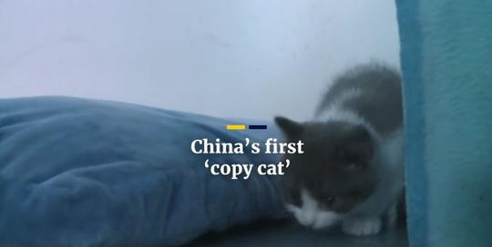 Ilmuwan China Berhasil Membuat Kloning Pertama Kucing Yang Diberi Nama Garlic 2.0