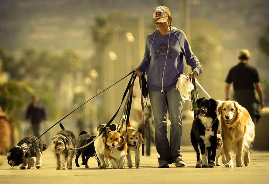 Memelihara Anjing Bisa Menurunkan Risiko Kematian, Benarkah?