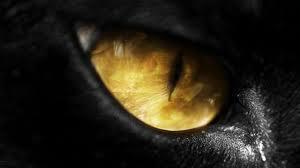 Mitos, Binatang Bereaksi Bila Melihat Jin (Gansist Percaya?)