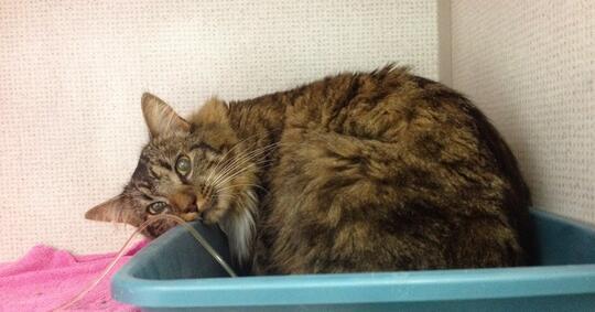 Kenali Penyakit yang Bisa Diderita Oleh Kucing Ini Gan, Cat Lovers Masuk!