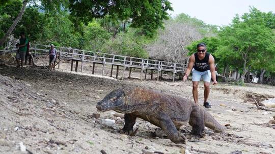 Jika Menjadi Destinasi Wisata Eksklusif, Apa yang Harus Dipersiapkan? Nasib Komodo!