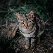 Ilusi Adhi Shakti & Badrakali Yang Mengerikan Dalam Kegaduhan Kucing Di Tengah Malam