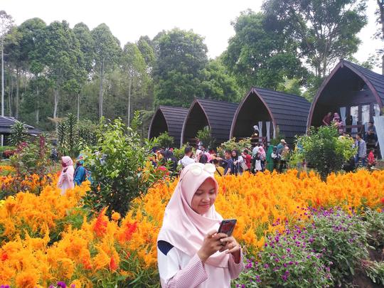 Foto dengan Background Bunga Celosia Ala Eropa, Disini Aja!