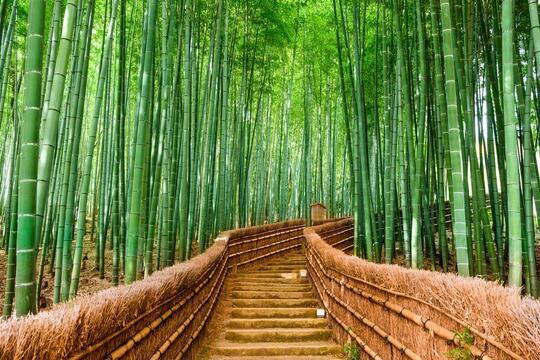Kaos Berbahan Bambu Yang Semakin Diminati Dan Ramah Lingkungan
