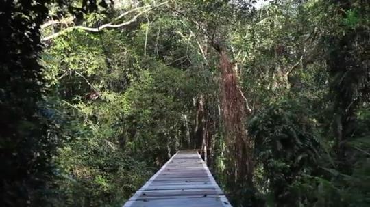 Wisata Lokal: Pesona Danau Sentarum yang Menyimpan Beragam Spesies Langka