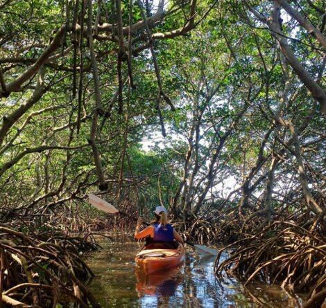 Jelajah Wisata Hutan Payau, Ingin Meniti Jaring Mesra di Tengah Rimbunnya Mangrove?