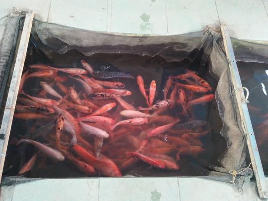 Mau Melihat Bermacam Ikan yang Harga Tiketnya Murah Kebangetan? Disini 500 Perak Saja
