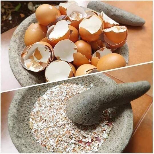 Gokil Abis! Ternyata Kulit Telur Bisa Dimasak