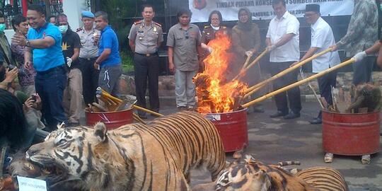 Perdagangan Satwa menjadi penyebab Punahnya Satwa liar di Indonesia