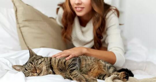 ternyata-pelihara-kucing-bisa-cegah-stroke-dan-penyakit-jantung