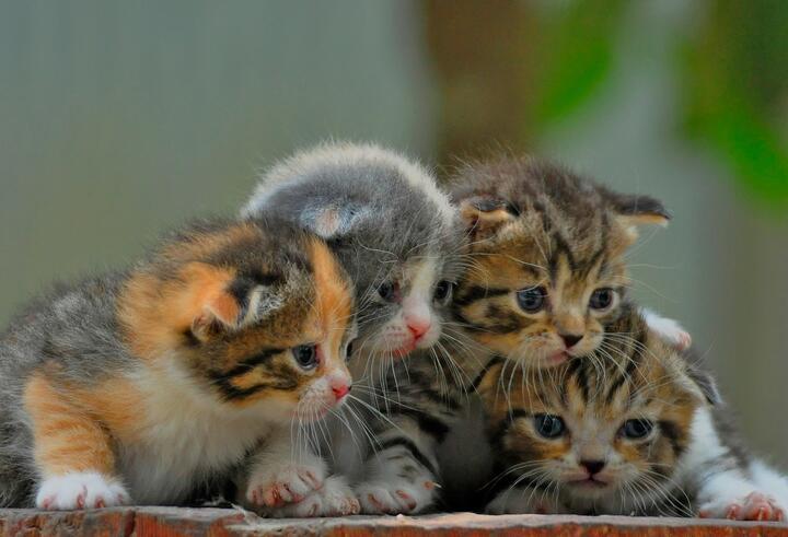 Berbagai Hal yang Kucing Gak Suka dari Majikannya
